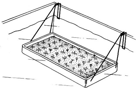 Размножение растений мафия betta splendens